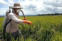 Brasileiro consome 5,2 litros de agrotóxico por ano, alertam ambientalistas