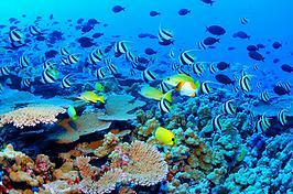 FAPESP e NSF lançam nova chamada para apoiar pesquisas em biodiversidade