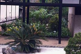 Honda cria jardim da amizade Brasil-Japão no Ibirapuera