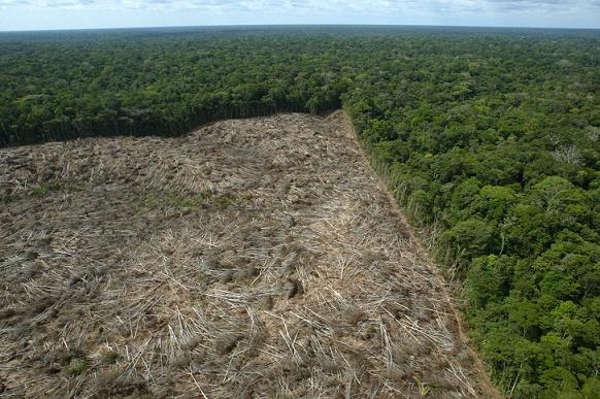 Unilever discute desmatamento