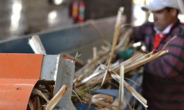 Weber Haus aproveita bagaço de cana