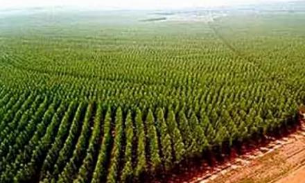 Mato Grosso discute florestas e madeiras