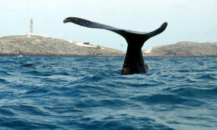 Atlântico Sul terá santuário de baleias
