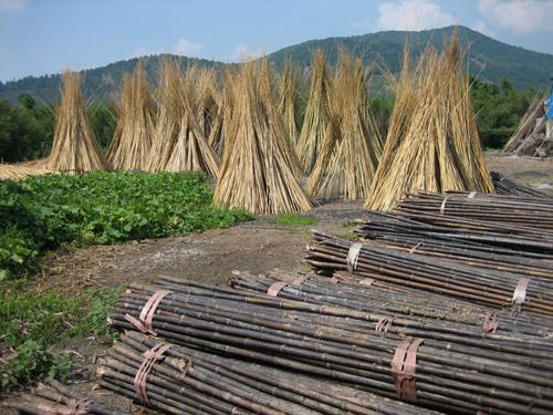 Curso de Bioconstrução em Bambu