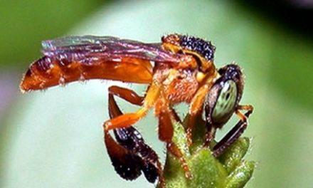 Um curso para manejar abelhas