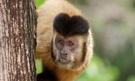 Biólogos discutem conservação de animais silvestres