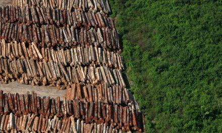 Desmatamento da Amazônia caiu 18%