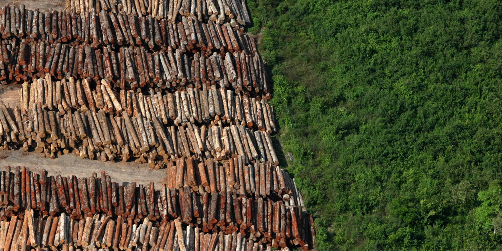 Fotos da amazonia antes do desmatamento