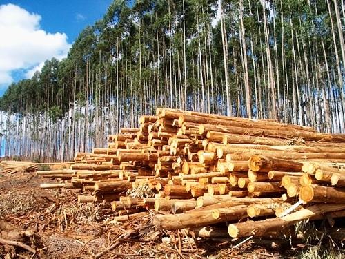Griletto muda bandeja para economizar dinheiro e árvores