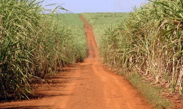 Feito de cana, plástico brasileiro é reconhecido pela ONU