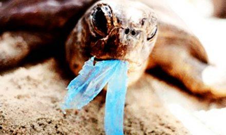 Plástico causa morte de tartarugas