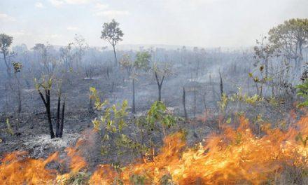 Descontrolado, fogo destroi o Cerrado