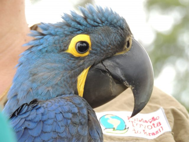 Mistérios e desafios do Pantanal