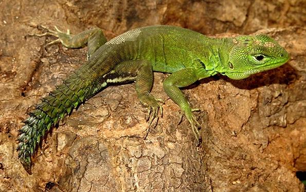 Expedições à Amazônia revelam novas espécies