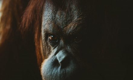 Considerações sobre a humanidade através do olhar de um orangotango marxista e oprimido