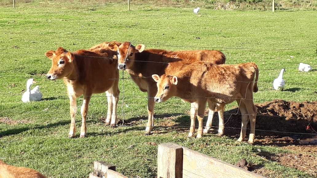 Pecuária sustentável: produção menor, lucro maior