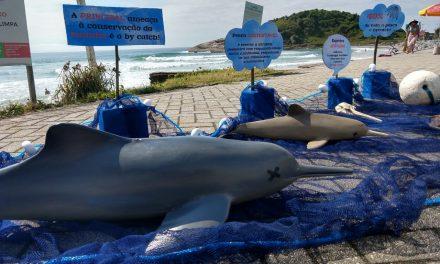 Captura acidental provoca morte em massa de animais marinhos