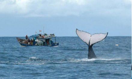 640 mil toneladas de redes são descartadas nos mares