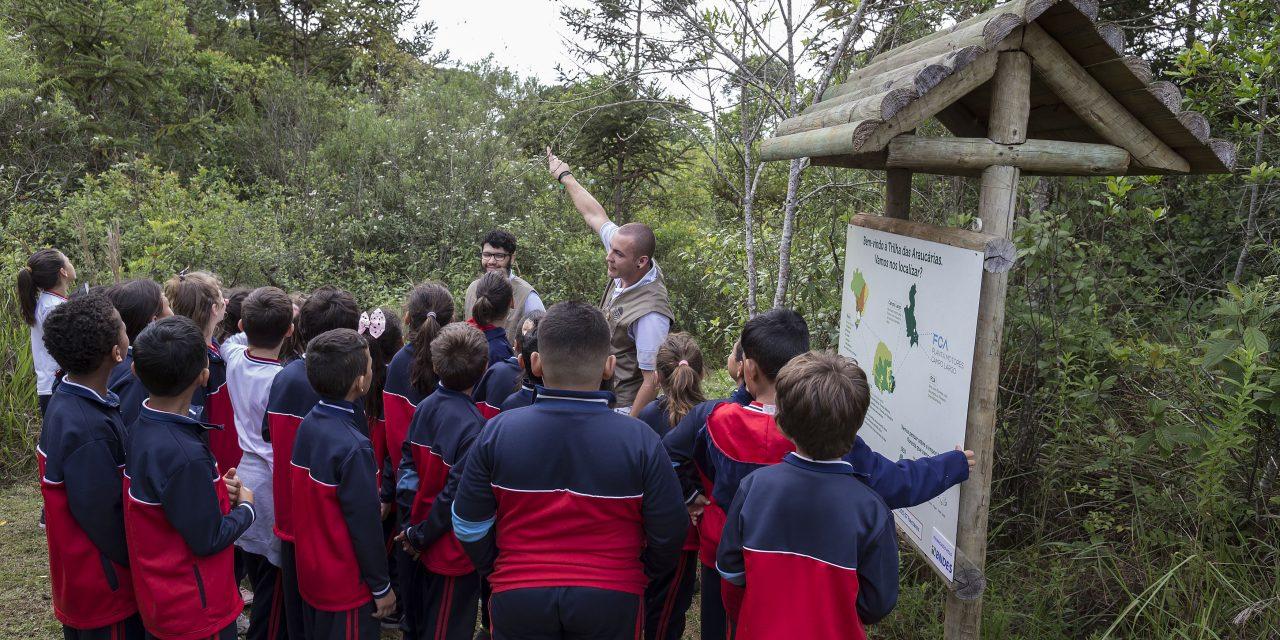 Projeto ambiental quer salvar floresta com Araucária