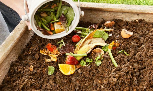 Como transformar o lixo orgânico em adubo