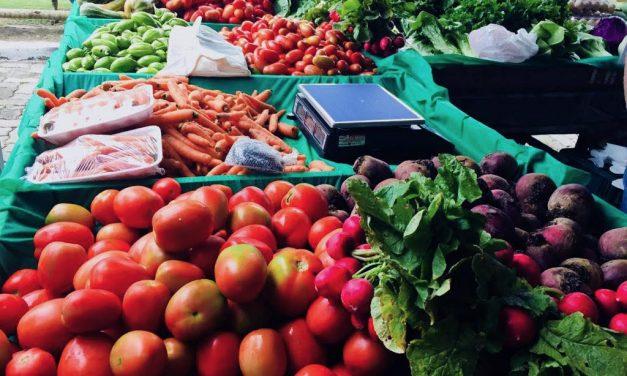 Palestra sobre Olericultura