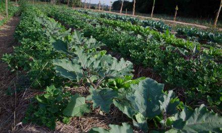 Produção de orgânicos cresce 20% ao ano