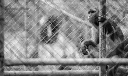 São Paulo pode proibir novos zoológicos e aquários