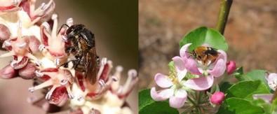 Polinização é ameaçada por desmatamento e agrotóxicos