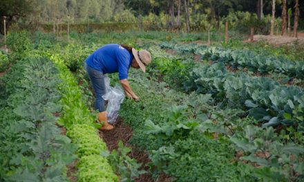 Homeopatia chega à agricultura