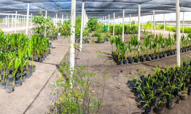 As ações sustentáveis da FCA em Goiana