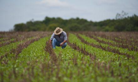 Um curso de agronegócio sustentável