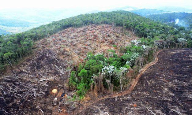 A morte ambiental