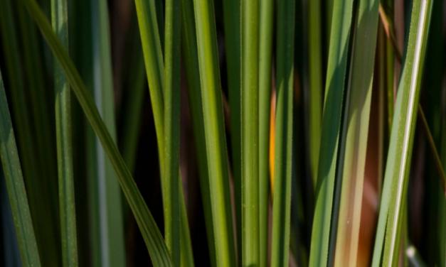 Biocombustíveis podem reduzir a mudança no clima
