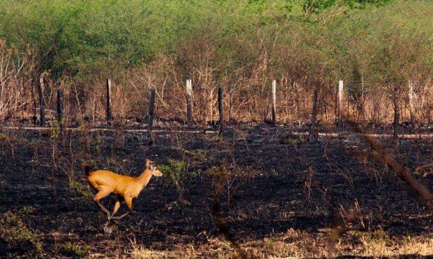Socorro à fauna atingida pelos incêndios