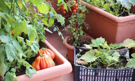 Sementes na quantidade certa para a horta caseira