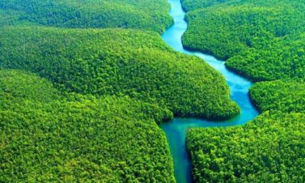 A Amazônia como produto Caviar
