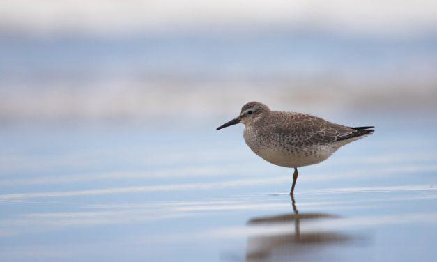 Projeto protege aves em Peruíbe