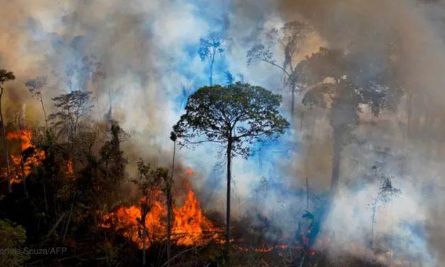 Degradação da floresta amazônica pode ser definitiva
