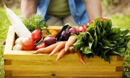Sistema combate a fome e reduz emissões