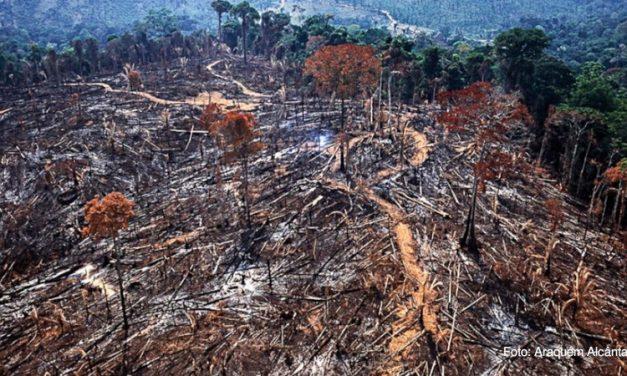 Floresta tem 305 focos de incêndio por dia