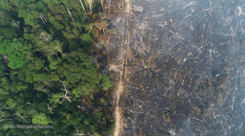 Em um mês, mais de 1000 km² desmatados