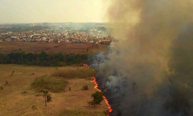 Havaianas doa R$ 100 mil para ações no Pantanal
