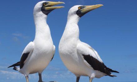 Abrolhos, o paraíso das aves