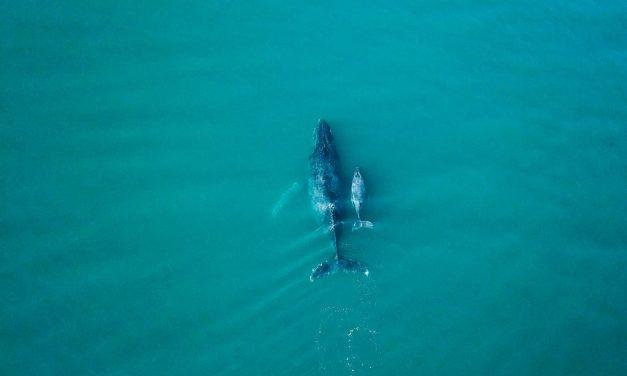 Baleia em Ilhabela