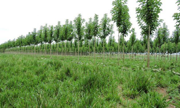 Árvores em sistema integrado acumulam 8t de carbono